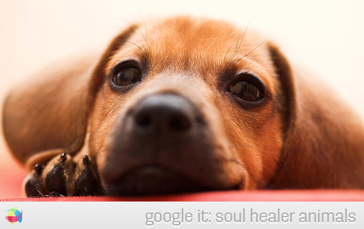 Cute-Dachshund-Puppy-doggie-face-nose-soul-healer-animals