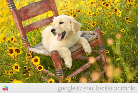 So much to love about this picture! puppy-yellow-flowers